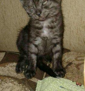 Котёнок Шахерезада