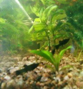 Аквариумы и рыбки