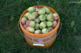 Ведро яблок 4 сорта