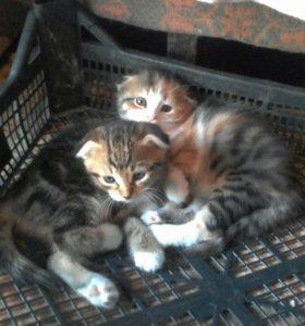 Котята-девочки