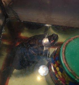 Черепахи бесплатно