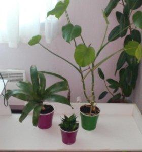 Трио комнатных растений