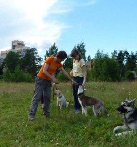Группы по дрессировки собак