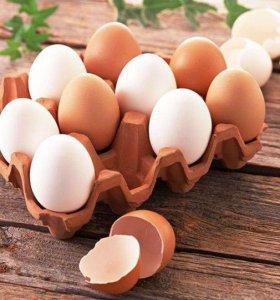 Яйцо от домашней курочки
