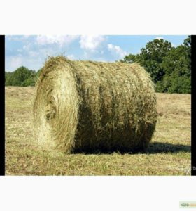 продам сено урожай июль 2017