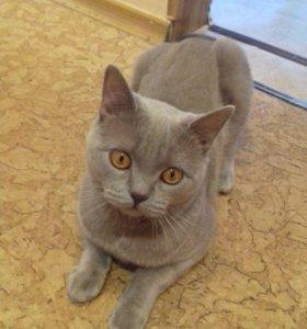 Кот на вязку)