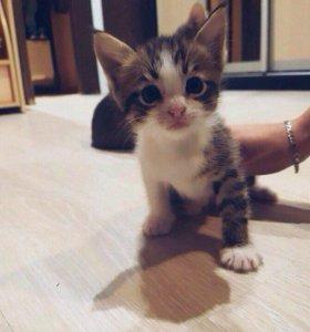 Купить кота в орехово зуево