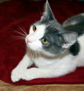 Котёнок Пятнышко. 4 месяца