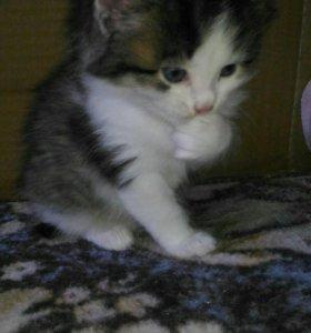 Котенок от матери мышеловки