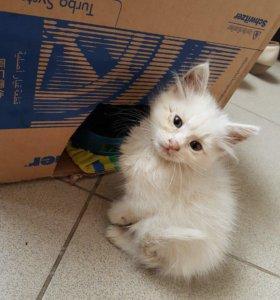 Котёнок,девочка
