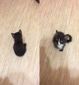 Котёнок!