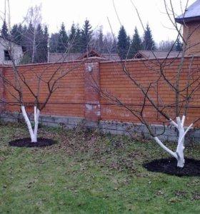 Профессиональная обрезка плодовых деревьев