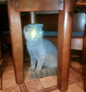 Симпатичный котик приглошает дам на вязку.