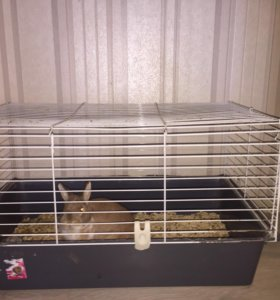 Продаётся декоративный кролик вместе с клеткой