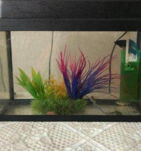 Аквариум с фильтром и рыбами сомики, петушок