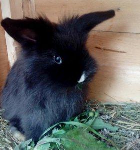 Срочно продам декоративного кролика.