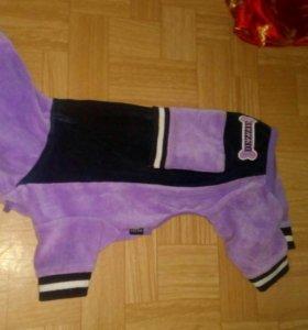 Спортивный костюм для собачки