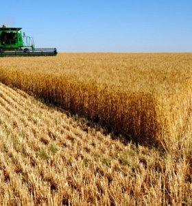 Пшеница фуражная, Ячмень, Горох