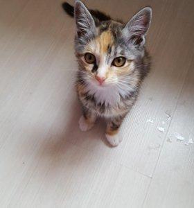 Кошечка 3 месяца.тихая спокойная .к гигиене приуче