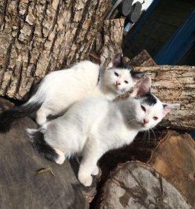 Котята(кошки)