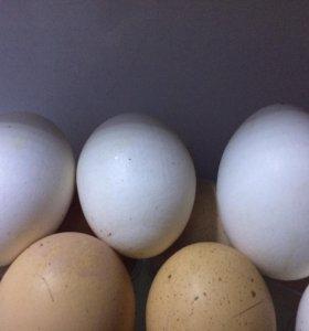 Продаётся яйцо куриное!