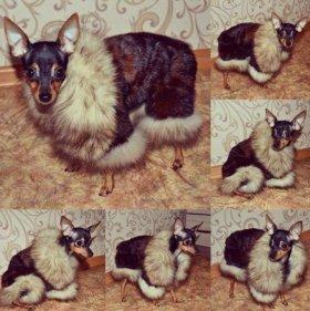 Норковая шуба для собачки