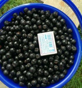 Ягоды черноплодная рябина