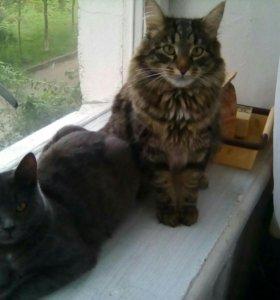 Катёнок и кот
