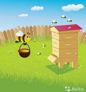 Пчелы с Ульем