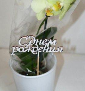 Фисташковая орхидея Фаленопсис