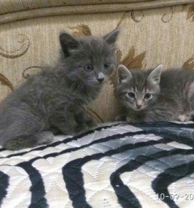 Умные котята от умной Кошки!!!
