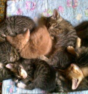 котята от домашней кошки в добрые руки