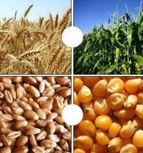 Продам пшеницу,ячмень,кукурузу,долблёнку и т.д