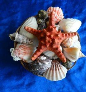 Южный набор морской