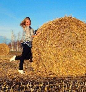 Ячмень Овес Пшеница