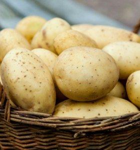 Картофель деревенский с доставкой