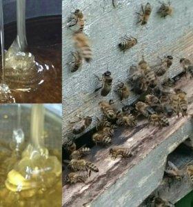 Мед пчелиный от Пчеловода