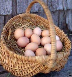 Куриные и утиные яйца