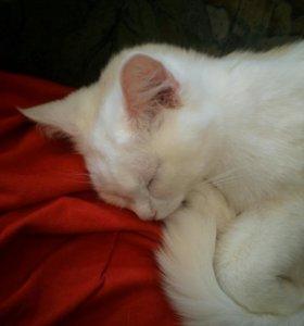Белая кошка срочно