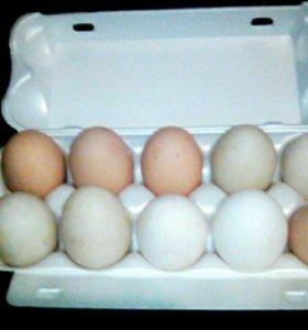 Яйцо куриное домашнее.Мясо птицы..