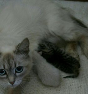 Отдам котёнка в добрые руки!