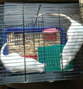 Мышки и клетка.