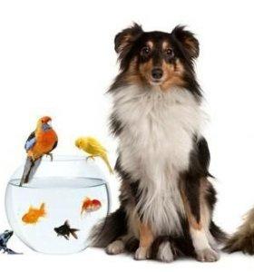 Предоставляю услугу по передержке домашних животны