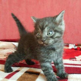 Кошка 1 месяц к гигиене приучена