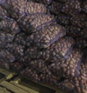 Картофель Оптом от 10 тонн