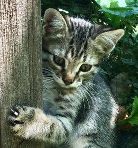 Чудесные котята ищут хозяев!