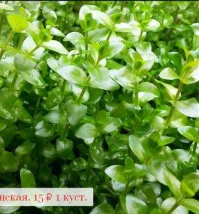 Растения в аквариум 10 видов