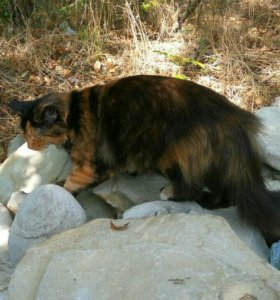 Кошечка Катя в добрые руки
