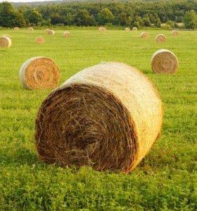 Продаю сено в рулонах и тюках