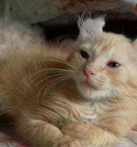 Продам котиков